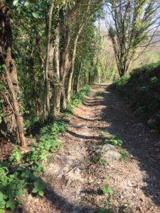 regina vida castello ahrensperg stazione terapia forestale valli del natisone friuli italia - piano