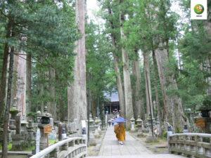 Foresta sacra in Giappone stazione di terapia forestale Valli del Natisone